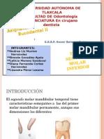 SEGUNDO MOLAR INFERIOR.pptx