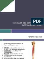 músculos compartimiento lateral de la pierna