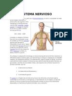 Sistema Nervioso Completo