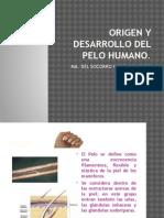 Origen y Desarrollo Del Pelo Humano