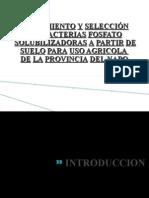 Aislamiento y SelecciÓn de Bacterias Fosfato Solubilizadoras
