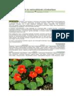 Növénytársítások és vetésváltások a biokertben.docx
