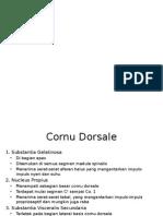 Medula Spinalis Cornu Posterior