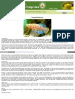 Ornamental Fish Farming