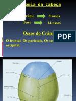 Anatomia da cabeça e coluna vertebral.ppt
