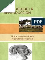 Celo y Fisiologia 2014