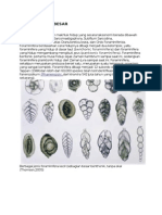 Biostratigrafi Foraminifera