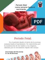 Embriologia- Periodo Fetal