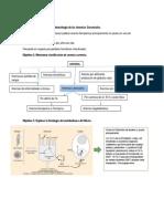 tuto anemia.pdf