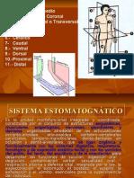 1.- Plano Sagital Medio 2.- Plano Frontal
