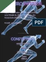 huesos-miembro-inferior UCCI