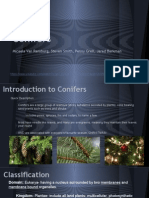 Conifers Seminar Powerpoint and Video
