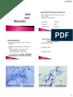 3. Superficial Cutaneous and Subcutaneous Mycoses