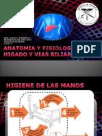 Anatomia Higado y Vias Biliares