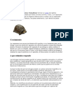 tortuga.docx