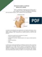Anatomia de La Cadera y Coxartrosis