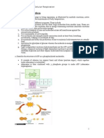 A2 Biology Notes Cellular Respiration