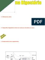 Sistema_Digestório.pps