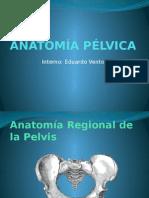 anatomia pelvica expo.pptx