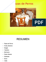 Razas de Perros.odp