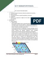 Tema 3-Sangre y Hematopoyesis Histología UAH
