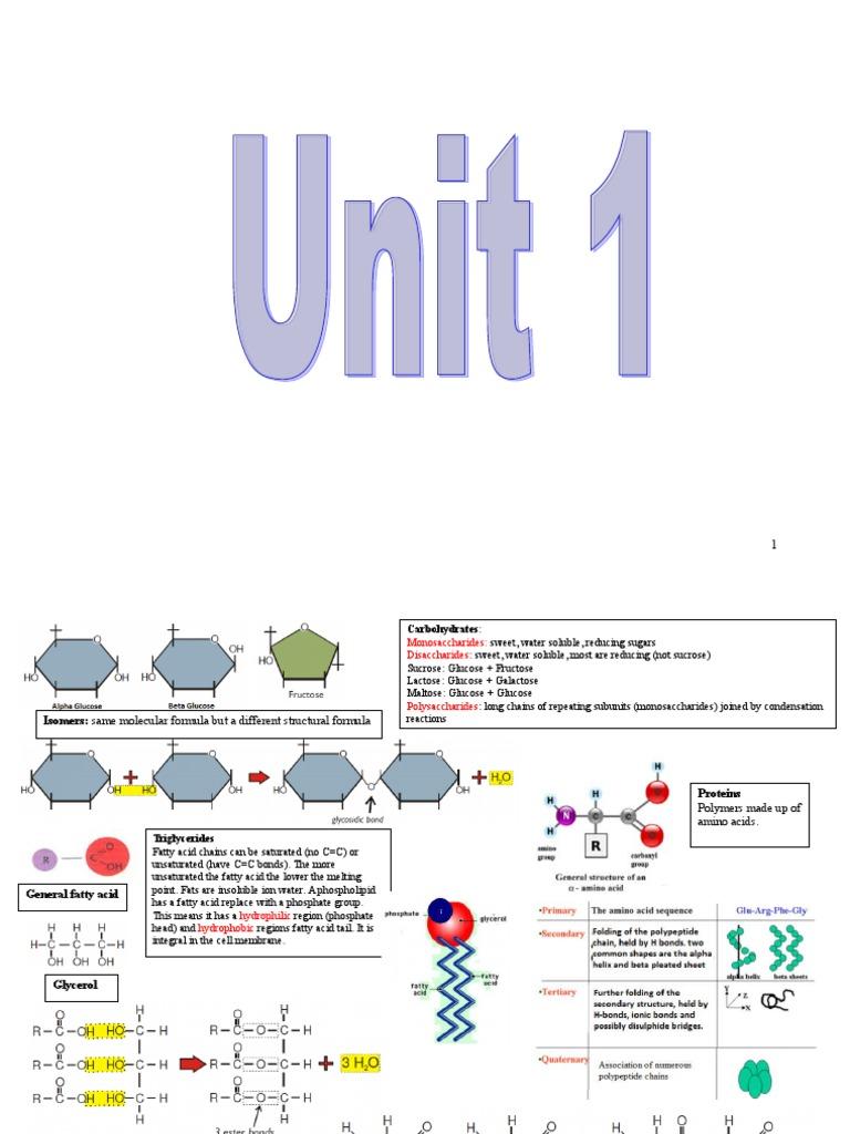 AS AQA biology summary diagram | Heart Valve | Heart