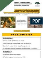 Maíces Amarillo y Criollos 2014, Jalisco