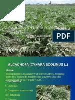 Alcachofa (Cynara Scolimus l.)