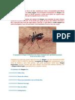 A Dengue é Uma Doença Viral