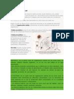 ORGANIZACIÓN CELULAR.docx