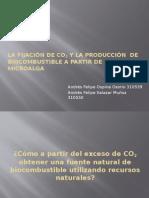 La Fijación de CO2 Reforzada y La Producción
