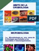 Microblogia
