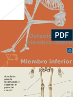 Osteologia del miembro inferior jose lb