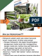 hidroponik_untuk_pemula