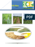 10th April,2015 Exclusive ORYZA Rice E-Newsletter by Riceplus Magazine