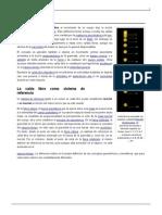176123874-Caida-Libre.docx