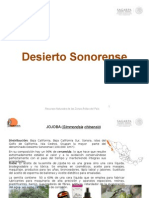 Desierto Sonorense