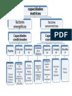 Capacidades Motrices o Fisicas (ED. Fisica)