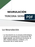 NEURULACION TERCERA SEMANA