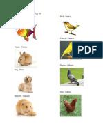 Animales Domesticos en Ingles y Español