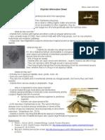 Chytrids Info