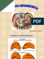 Glndulas suprarrenales