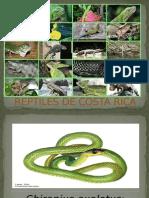 Reptiles de Costa Rica