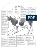 Dairy Cow Scoring Cards