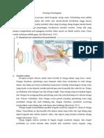 Fisiologi Pendengaran