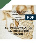 desarrollo denticion