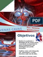 Anatomia Humana II- Venas Cavas