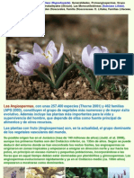 Botánica. Angiospermas. Clase Magnoliopsida