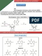 TP 5- NUCLEÓTIDOS  ÁCIDOS NUCLEICOS-.pdf
