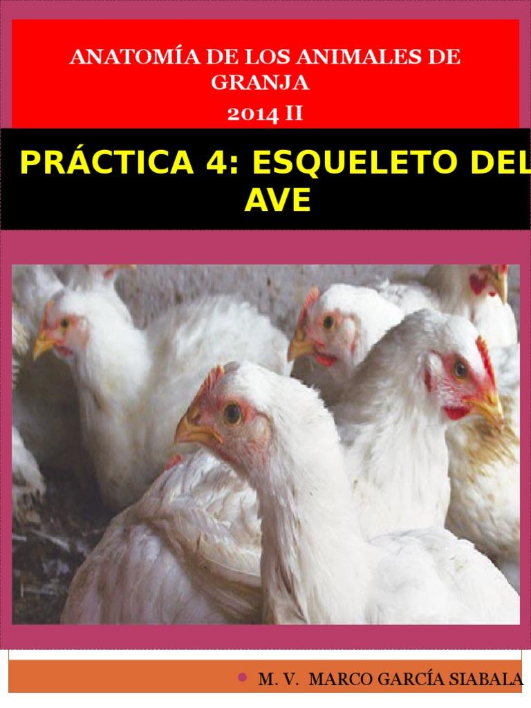 Practica 4_ Esqueleto Del Ave